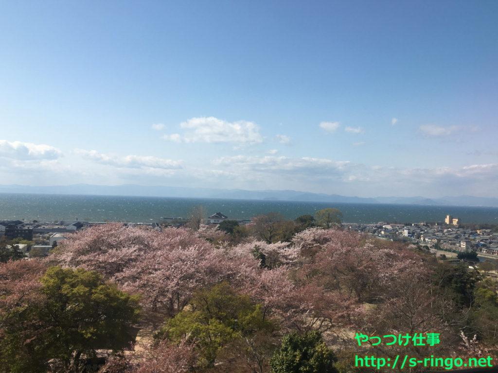 彦根城からの桜