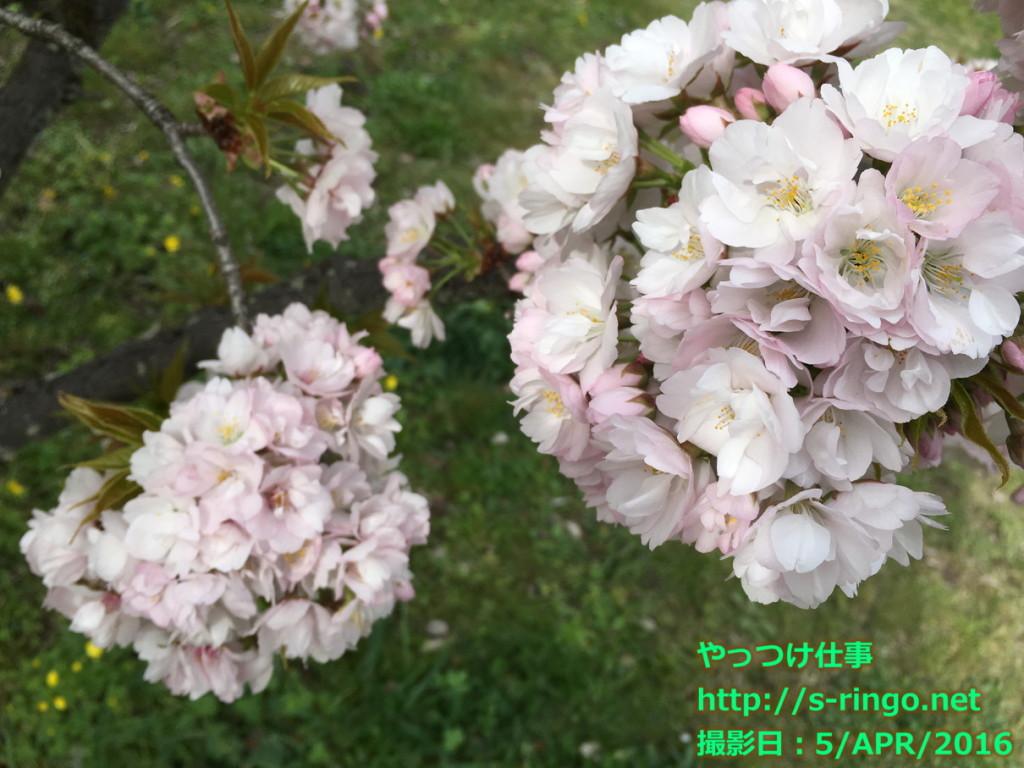 京都御苑04