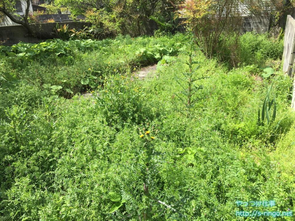 家庭菜園・開墾前