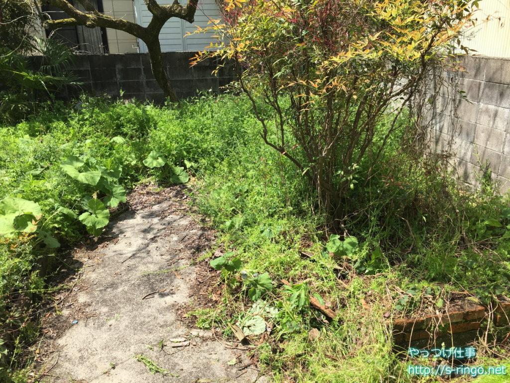 家庭菜園・草刈り前別角度