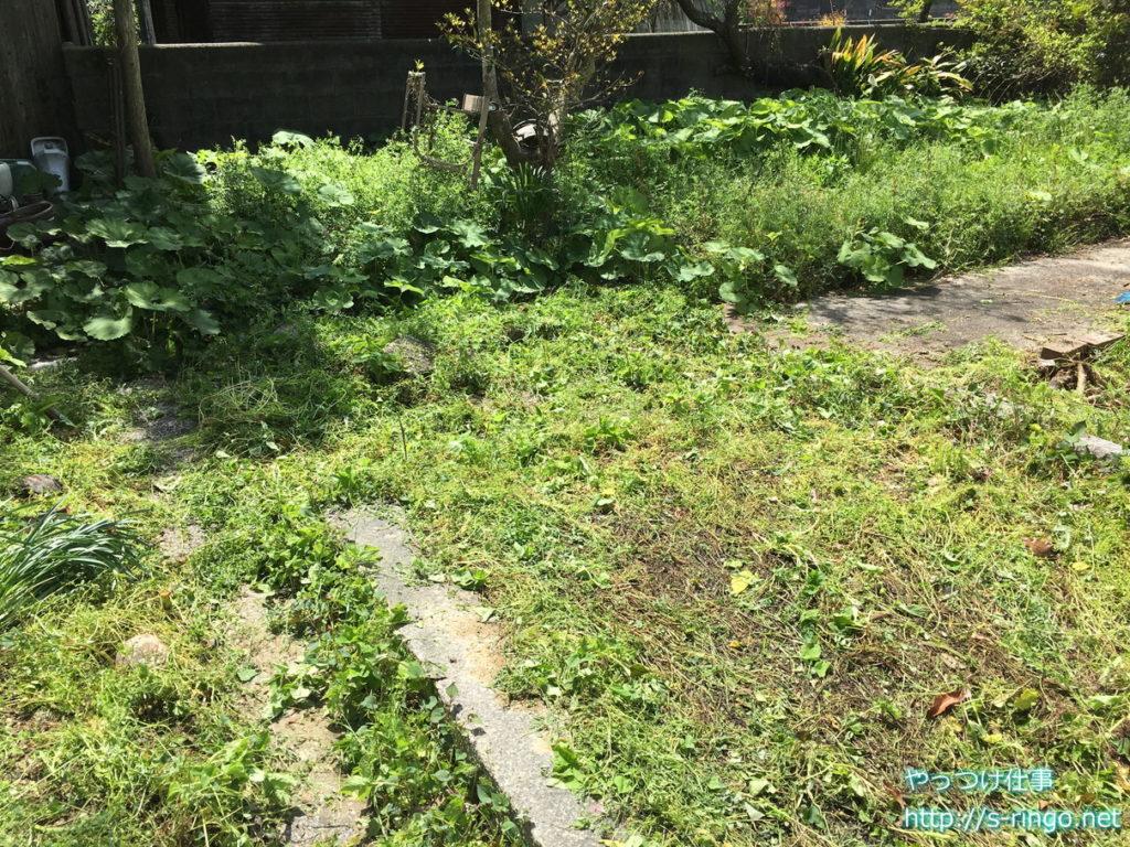 家庭菜園・草刈り初期
